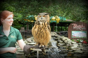 The largest owl in the world.
