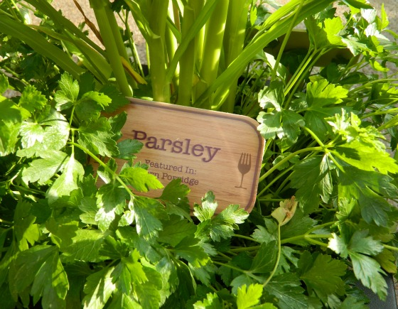 Parsley plant at Canada kiosk.