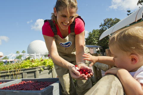 Kids can learn about the fun and fruity cranberry at Epcot's cranberry bog. Photo: BusinessWire/Disney