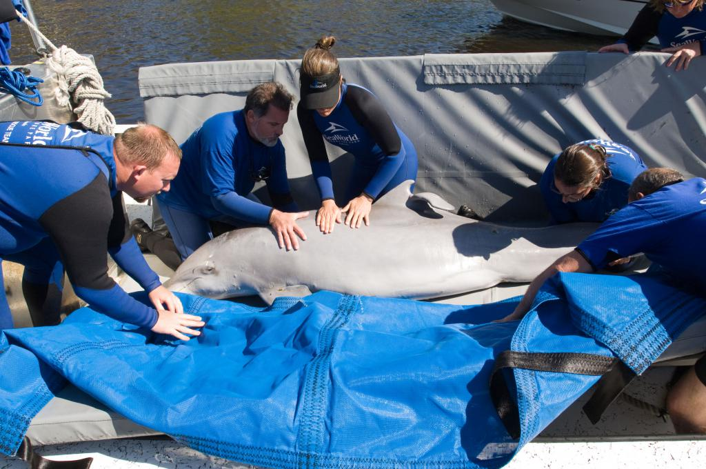 SeaWorld & Busch Gardens Conservation Fund gives $1.2 ...