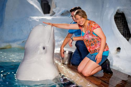Bindi and a beluga. Photo: SeaWorld Parks