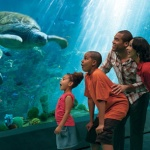 SeaWorld Orlando Announces new Scholarship for Orange County, Florida Students