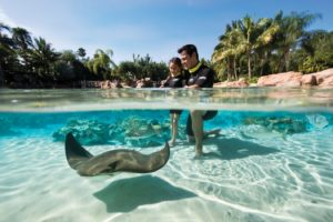 Discovery Cove/SeaWorld Parks
