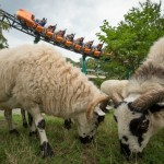 Busch Gardens goes back to Basics with Targeted Grazing