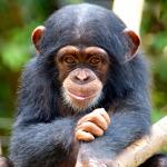 SeaWorld & Busch Gardens Conservation Fund Announces 2014 Grant Recipients